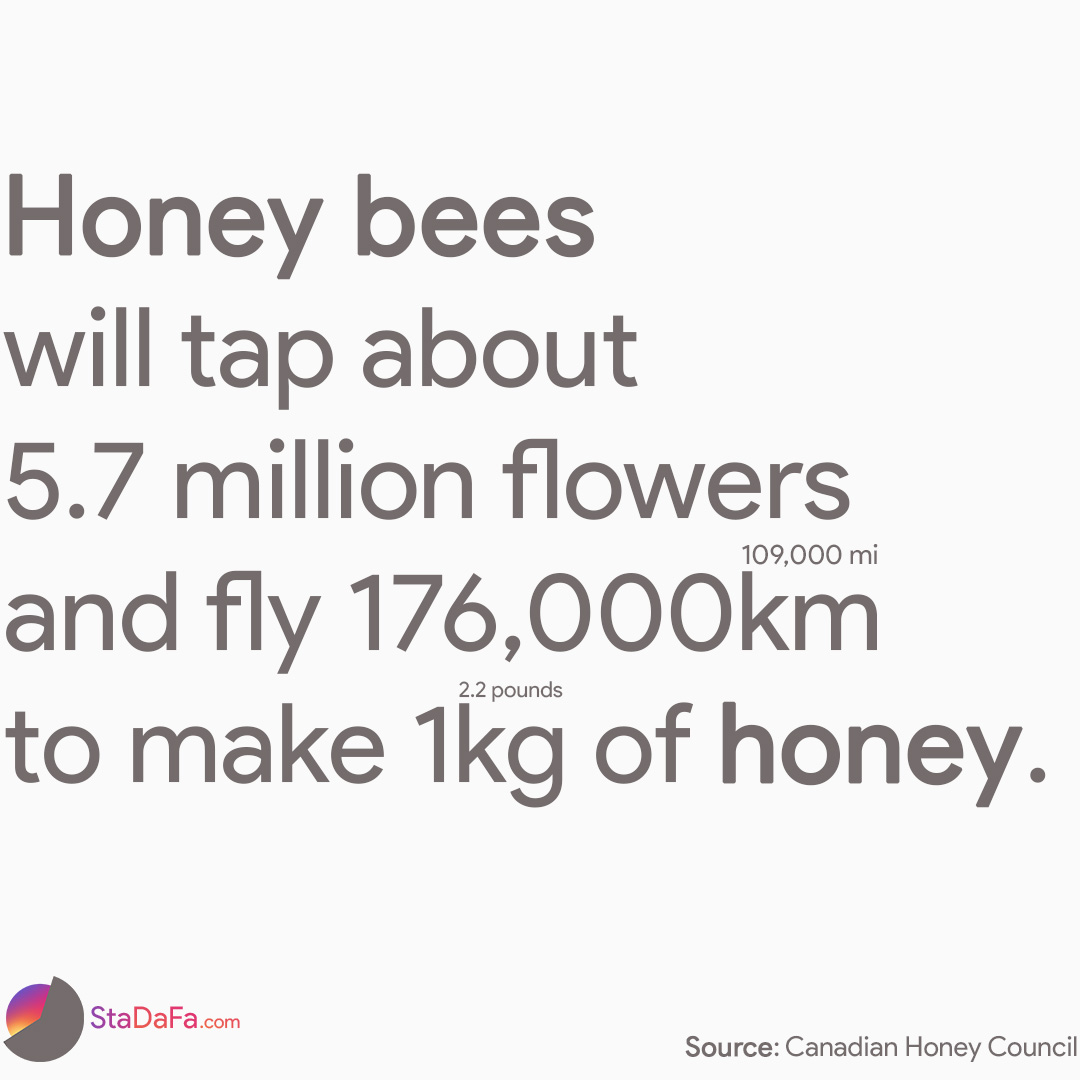 Honey bees will tap about 6 million flowers and fly over 170,000km to make 1kg of honey