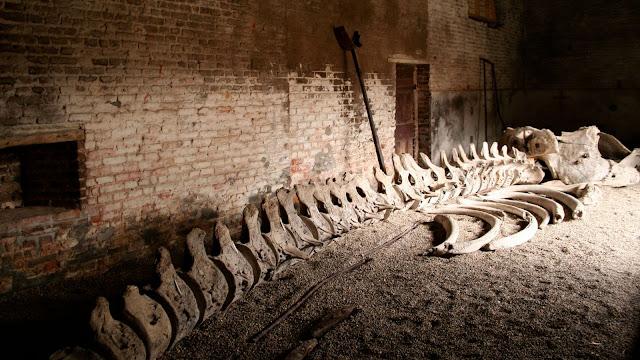 Sebuah Rumah Di Hebohkan Dengan Penemuan Rangka Tulang Paus