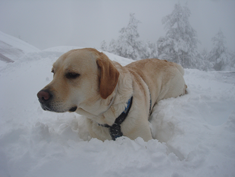 Tao dentro de la trinchera de nieve