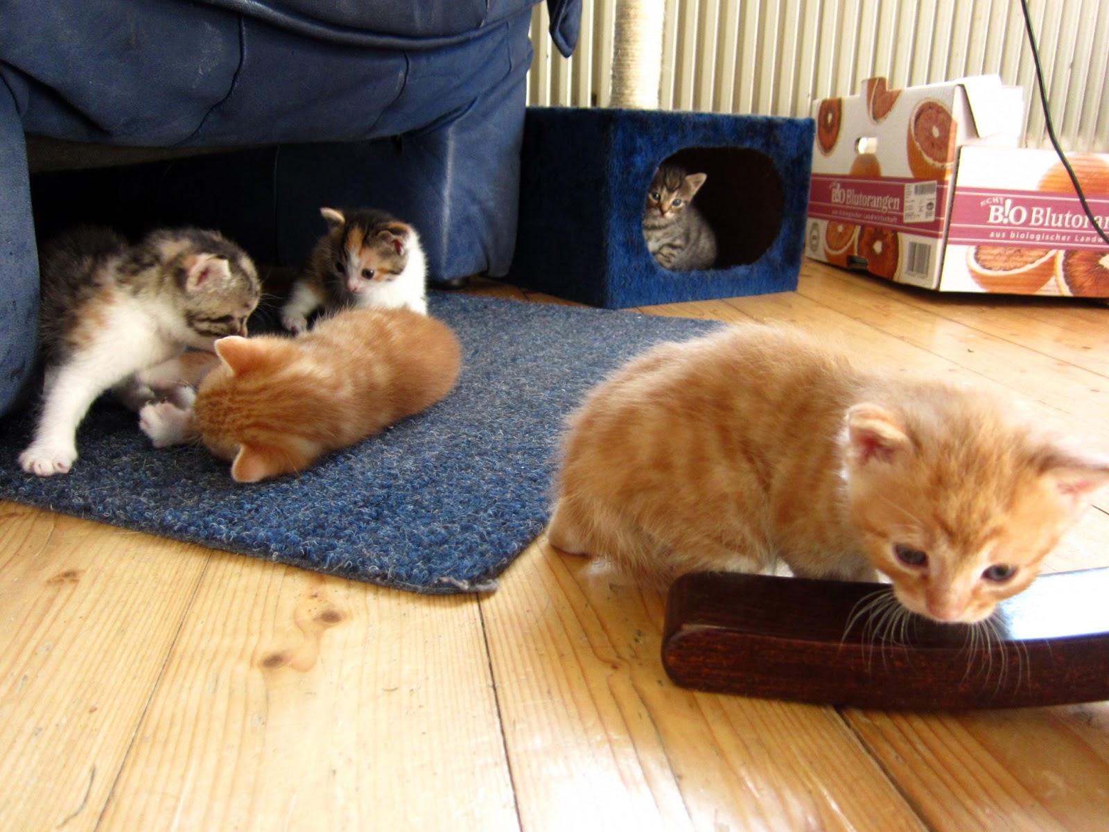 von Wien: Babykatzen