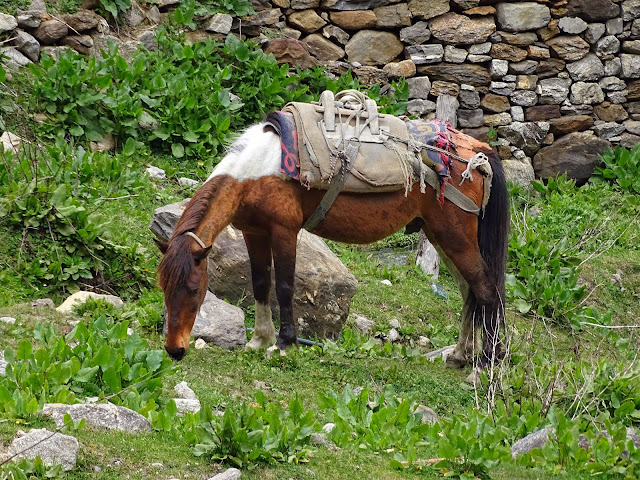 Mule at Khir Ganga