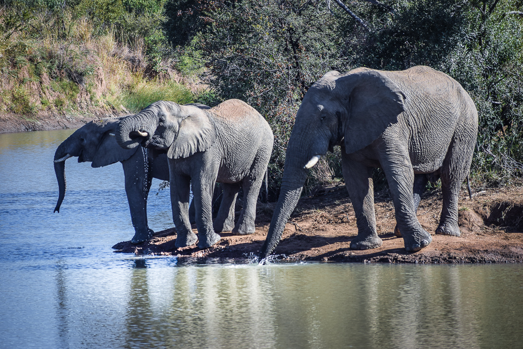 where to go on safari in south africa to see elefants
