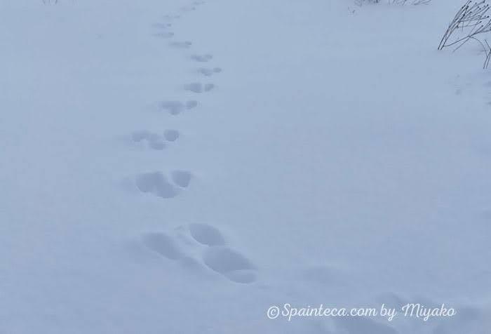 雪の上の可愛いうさぎの足跡