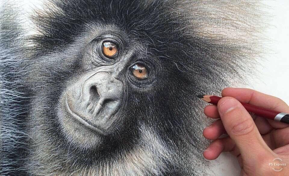 03-Baby-Mountain-Gorilla-mART-Realistic-Wildlife-Animal-Drawings-www-designstack-co