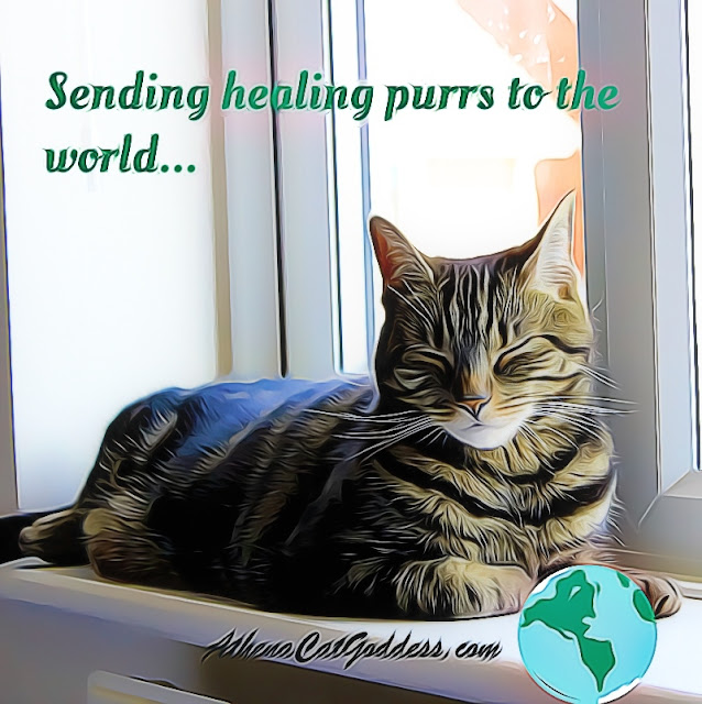 healing purrs graphic