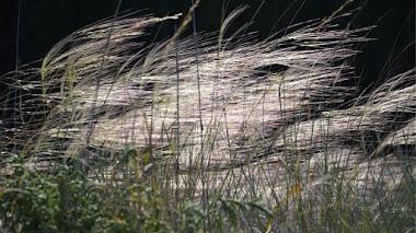 Flora silvestre mediterránea que da la bienvenida a la primavera