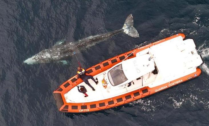 Γκρίζα φάλαινα εθεάθη για πρώτη φορά στις ακτές της Γαλλίας στη Μεσόγειο