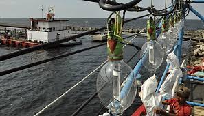 Penggunaan Lampu di kapal Perikanan