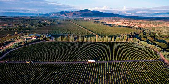 Tarija apunta al mercado internacional con su Singani