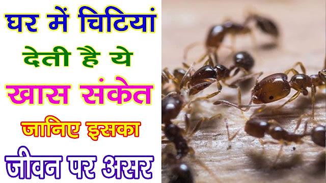 घर में चींटियों का इस तरह निकलना भी होता है खास संकेत, जानिए इसका जीवन पर असर