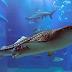 Yuk Intip Harga Tiket Osaka Kaiyukan Aquarium di Jepang