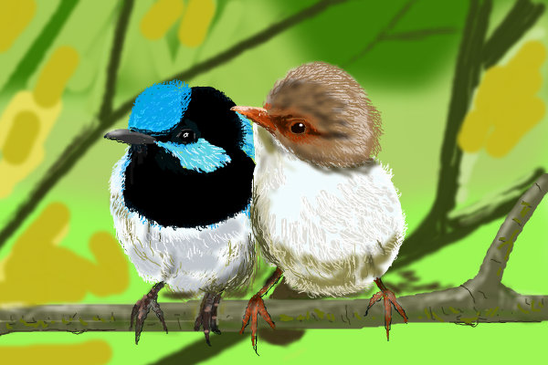 Wallpapers Love Birds: Wallpaper Gallery: Love Bird Wallpaper