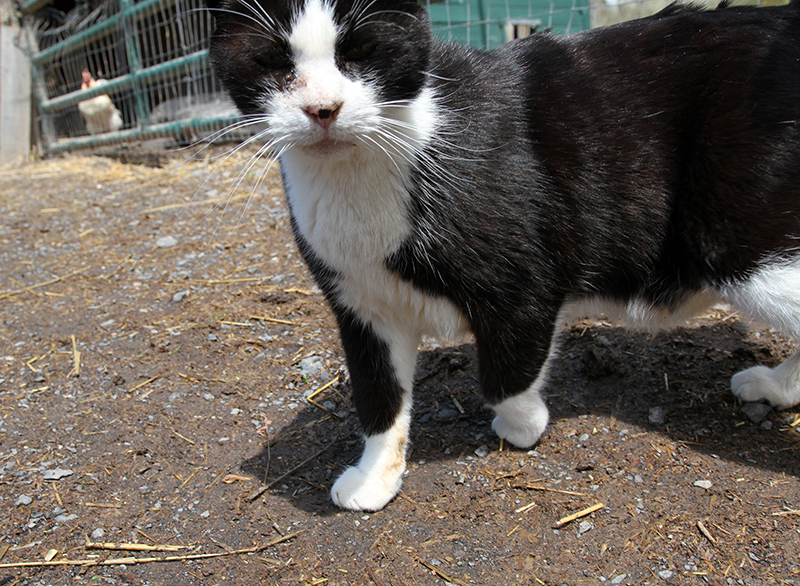 Veganreise New York Catskill Animal Sanctuary Oreo Cat