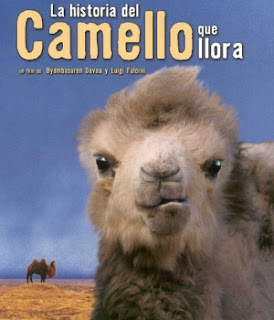 "Blog Safari Club, Cine documental online ""La historia del Camello que llora"""