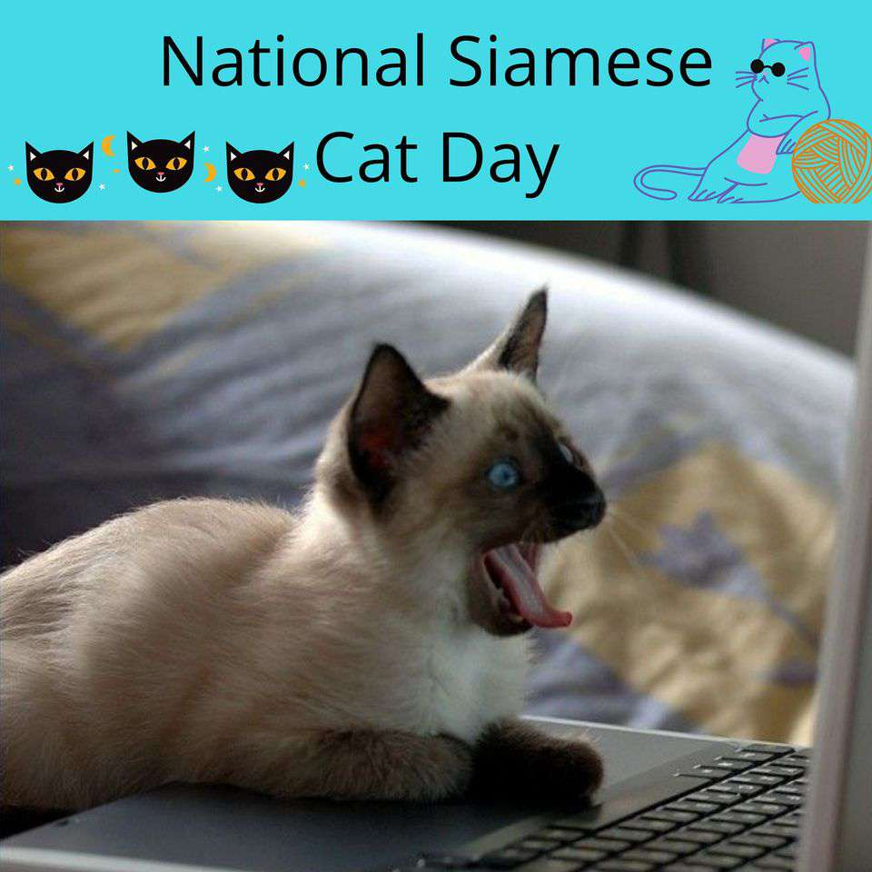 National Siamese Cat Day Wishes for Whatsapp