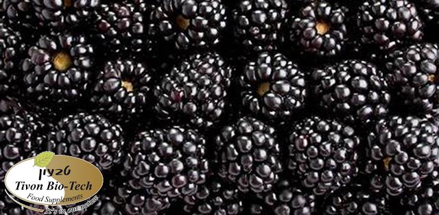 פרי פטל שחור