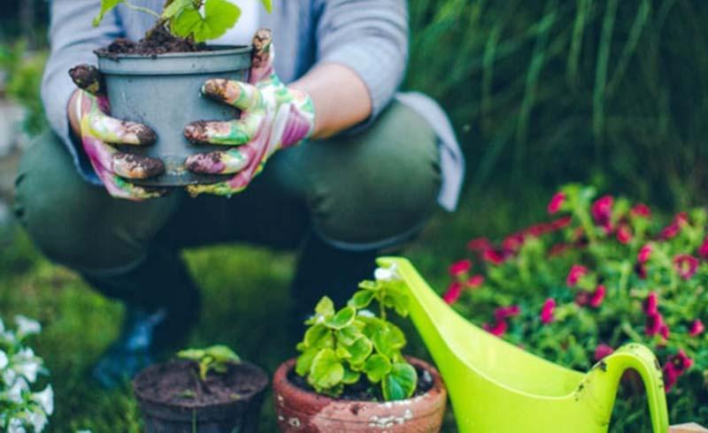 Garden, organic-gardening-tips
