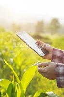 petani,modernisasi,pertanian,budidaya tanaman,internet,lmga agro