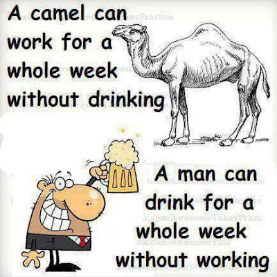 A camel can work for a whole week without drinking , a man can drink for a whole week without working