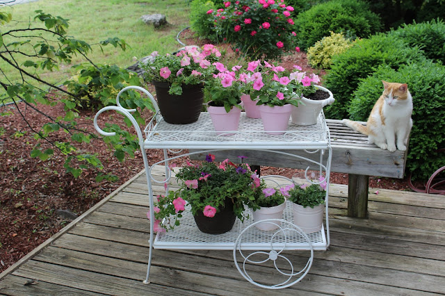 Olivia S Romantic Home Shabby Chic Garden