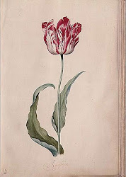 old botanical prints