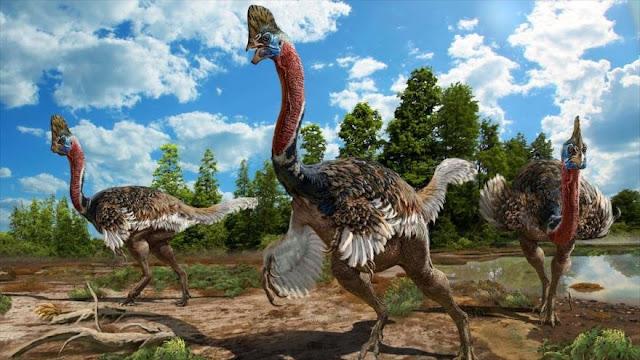 """Hallan una nueva especie de dinosaurio: el """"Corythoraptor jacobsi"""""""