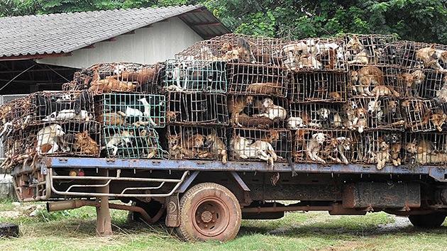 Resultado de imagem para torturando um animal