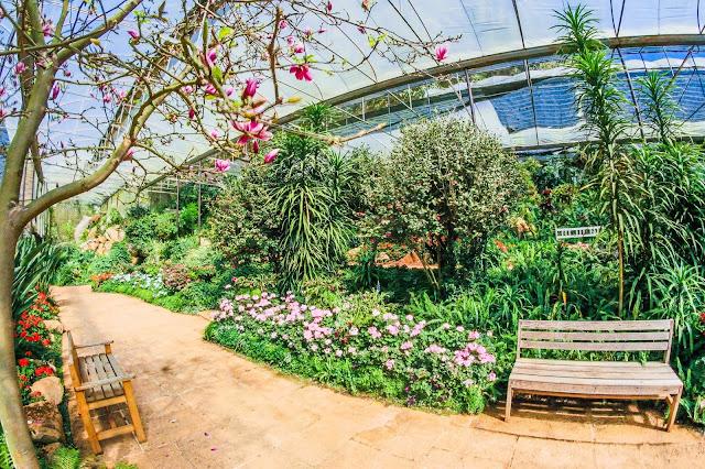 Davao Urban gardening