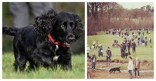 Последнюю прогулку умирающего пса сопровождало 350 незнакомцев! Потому что есть те, кому не всё равно