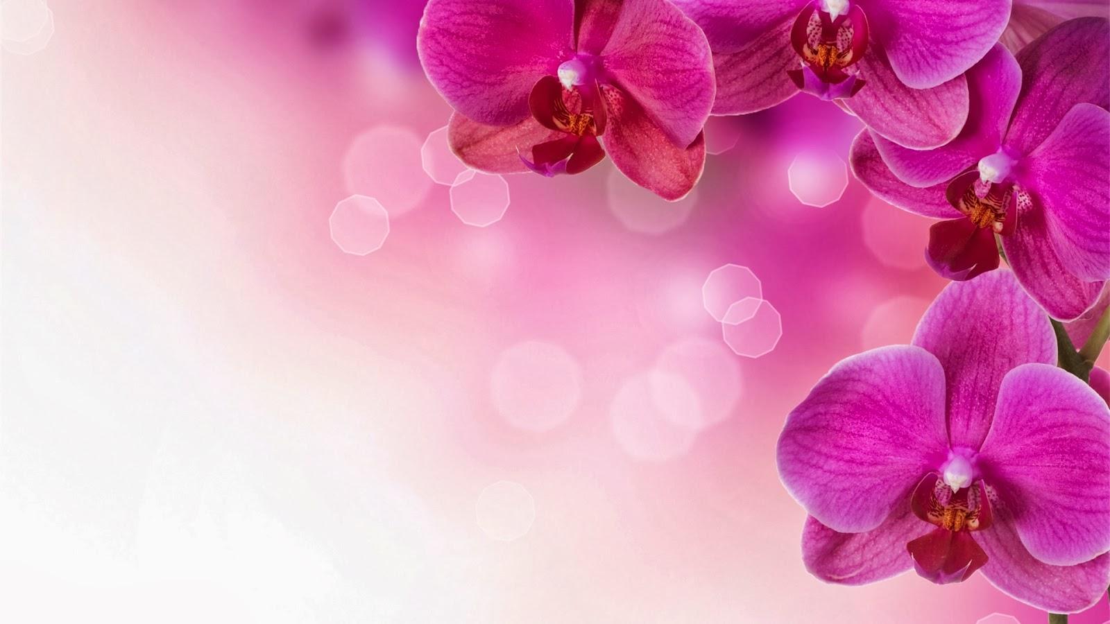 Fondo De Pantalla Flores Rosas: Fondo De Pantalla Flores Rosas