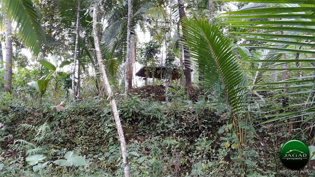 Tanah luas area Kalibawang Kulon Progo