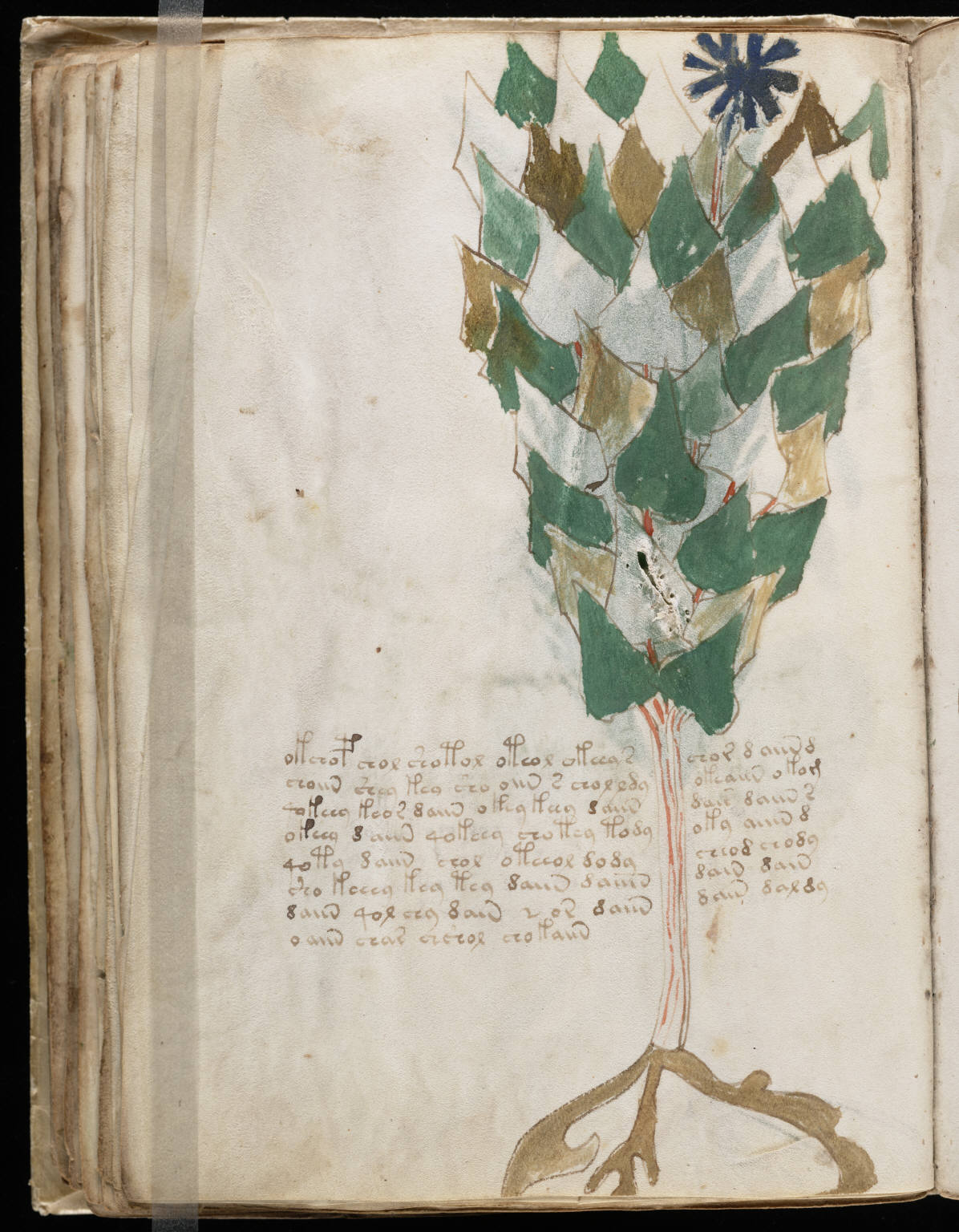manuscrito074