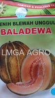 budidaya blewah, manfaat blewah, buah blewah, jual benih blewah, toko pertanian, toko online, lmga agro