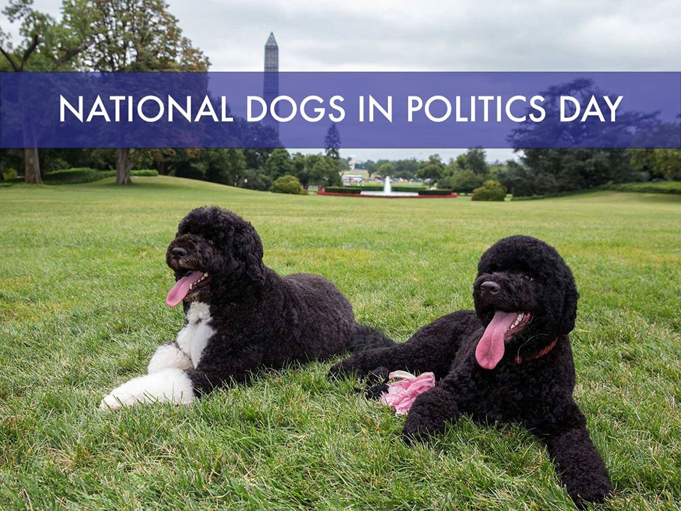 National Dogs in Politics Day Wishes Lovely Pics
