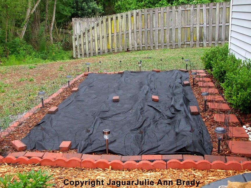 Weed Barrier Cloth Protecting Sunflower Seedlings ~ JaguarJulie