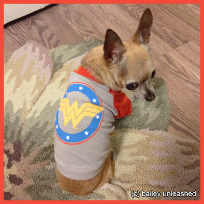 wonder woman dog via baileyunleashed.com