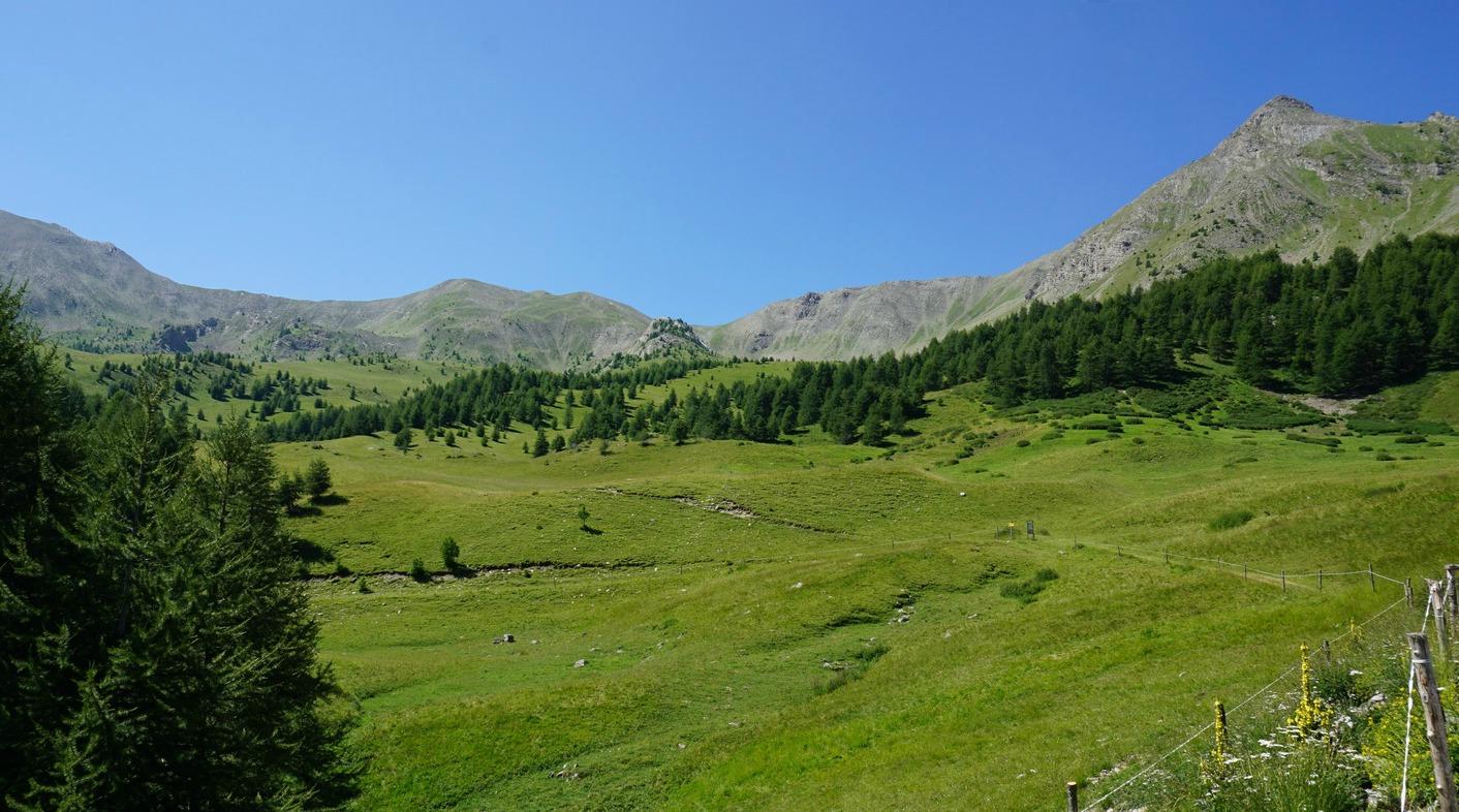 Alpine meadow near Cabane le Lac Les Orres