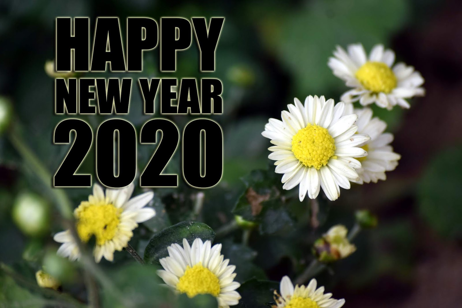happy new year 2020 4k image, wishes, greeting, photo