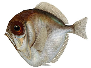 Fish in the deep sea can actually see color, but in a different manner than we do. The system testifies of the genius of the Master Engineer.
