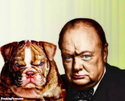 buldog winston Churchill