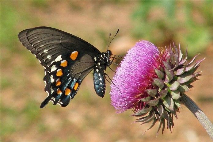 Kelebekler hakkında neler biliyorsunuz?