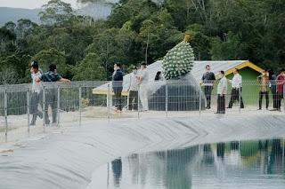 Fokus Majukan Pertanian, Bupati Humbahas Tinjau Perkebunan Durian di Pakkat