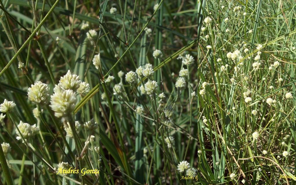 Native Plants Argentina
