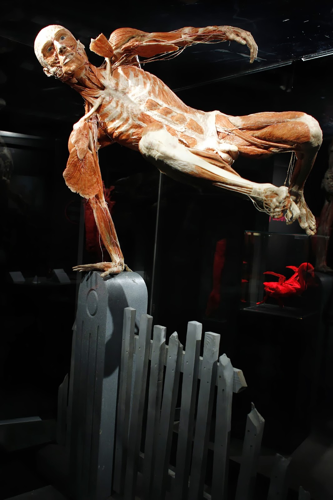 Body Worlds, Happiness, Project, Plastinated, Body, Human, Exhibition, Permanent, German,  Anatomist, Inventor, Technique, Gunther von Hagens, Amsterdam, Creation, Offbeat, Museum, Creator, Medical, Health, Education,