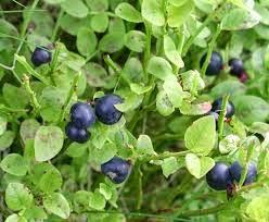 http://www.remede-plante.com/