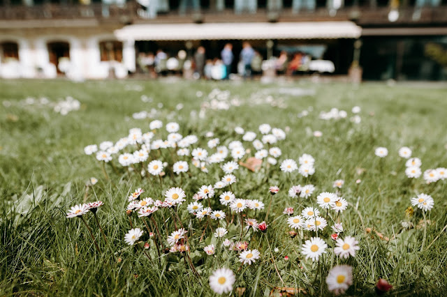 Daisies, Mountain wedding, Berghochzeit, destination wedding Bavaria, Wallgau, photo credit Magnus Winterholler Gipfelliebe, wedding planner Uschi Glas 4 weddings & events