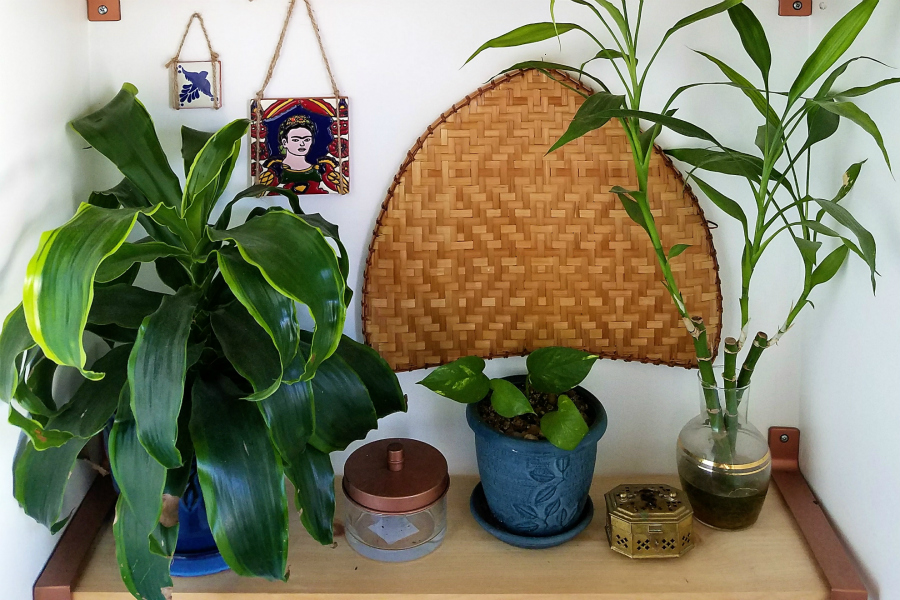Collected Boho Bathroom Shelfie With Plants and Friday Tile - Curated By The Boho Abode