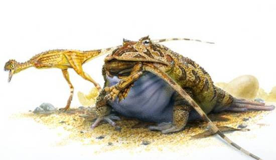 Katak Iblis Beelzebufo Ampinga Predator Para Dinosaurus Yang Hidup 70 Juta Tahun Lalu!!