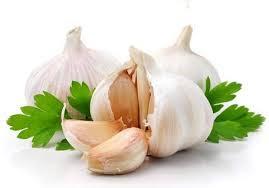Atasi Atasi nyeri saat menstruasi dengan bawang putih