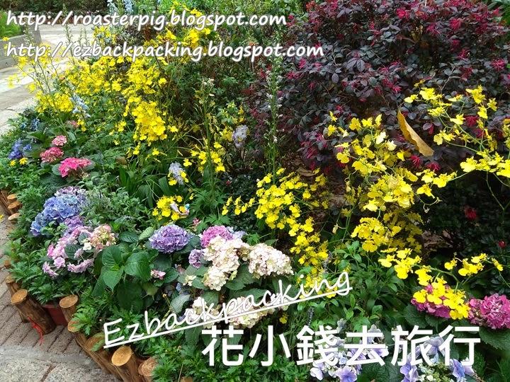 荃灣德華公園花展